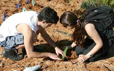 Des bénévoles plantent des arbres dans la forêt du Lehi au kibboutz Mishmar Ayalon. (Shmuel Bar-Am)