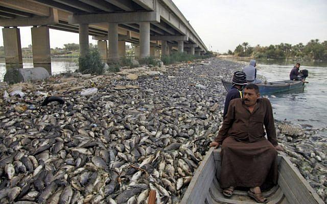 Des pêcheurs irakiens entourés de carpes mortes, le 2 novembre 2018. (Crédit : Haidar HAMDANI / AFP)