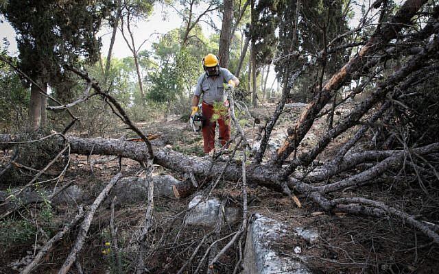 Photo d'illustration : Le KKL/JNF avec des bénévoles de  la République tchèque ont travaillé à replanter et à faire revivre la forêt Masrik dans le nord d'Israël, marquant le 100ème anniversaire de la Tchécoslovaquie, le 25 octobre 2018 (Crédit :  Anat Hermony/Flash90)