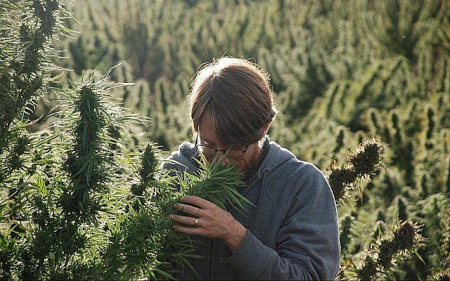 Ziv Genesove sent une plante de cannabis dans les montagnes du Rif. (Autorisation)