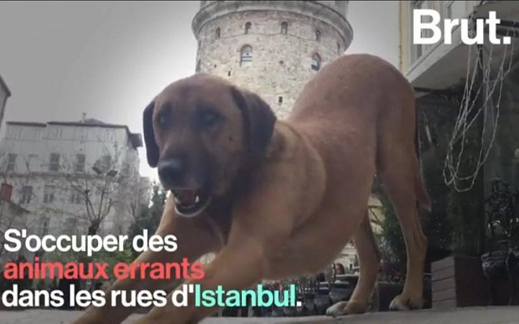 La municipalité d'Istanbul au chevet des animaux de rue. (Crédit : Brut via YouTube)