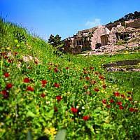 Les fleurs printanières dans la vallée de Kidron, à Jérusalem. (Crédit : Eliyahu Yanai)