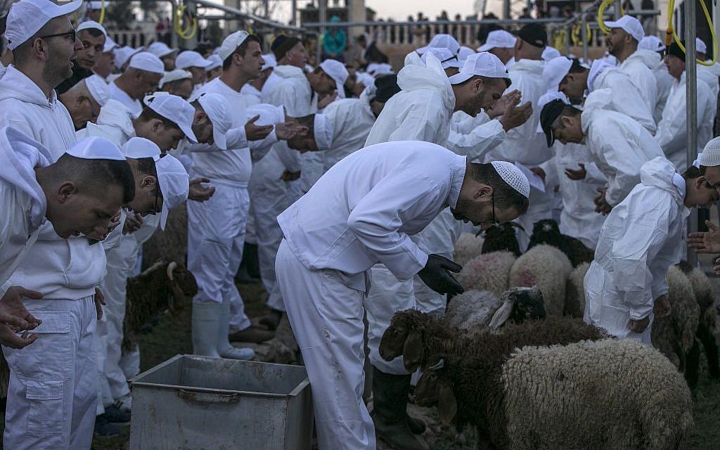 Les Samaritains font une prière sur les moutons et les chèvres qui seront tués lors du traditionnel sacrifice de la Pâque au mont Garizim, près de la ville de Naplouse, dans le nord de la Cisjordanie, le 18 avril 2019. (Jaafar Ashtiyeh / AFP)