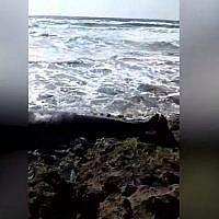 Une baleine échouée sur la plage Dor de Haïfa le 22 avril 2019. (Capture d'écran YouTube)