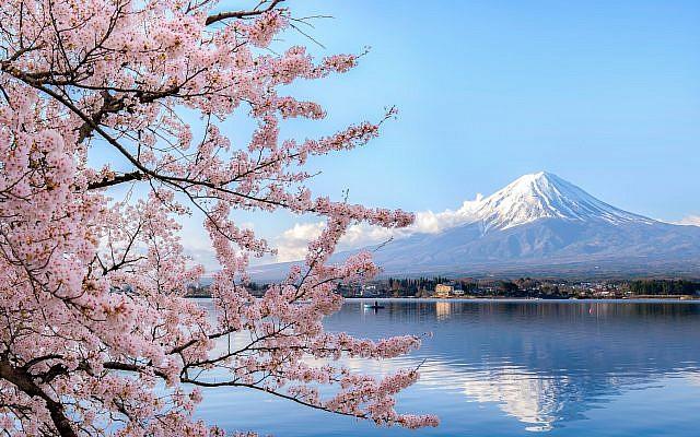Photo d'un cerisier en fleur non loin du mont Fuji au Japon (Phattana; iStock par Getty Images)