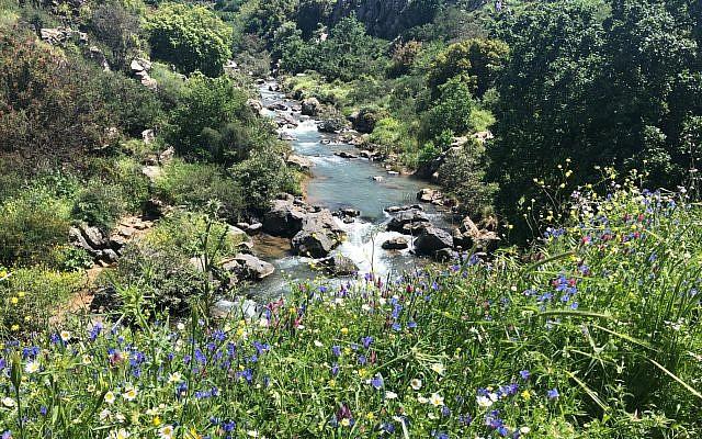 La rivière Saar sur le Plateau du Golan, le 3 avril 2019 (Sue Surkes/Times of Israël)