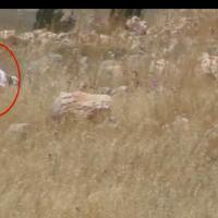 Une capture d'écran d'une vidéo de l'organisation de Défense de droits de l'homme B'Tselem. (Capture d'écran : YouTube)