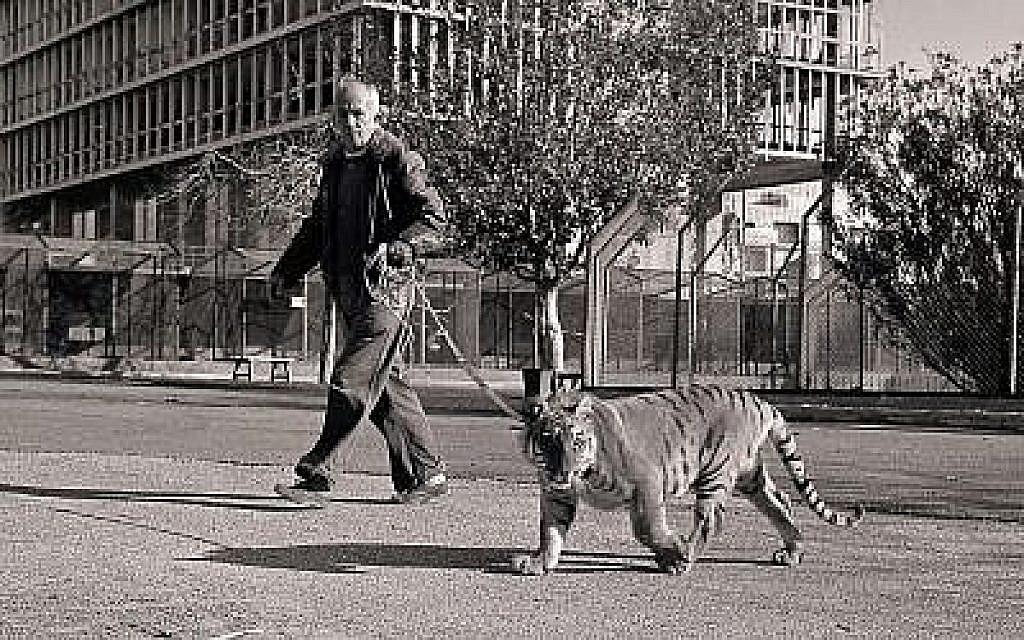Le rabbin Mordechai Shorenstein promène son tigre en laisse à Tel Aviv (Autorisation)