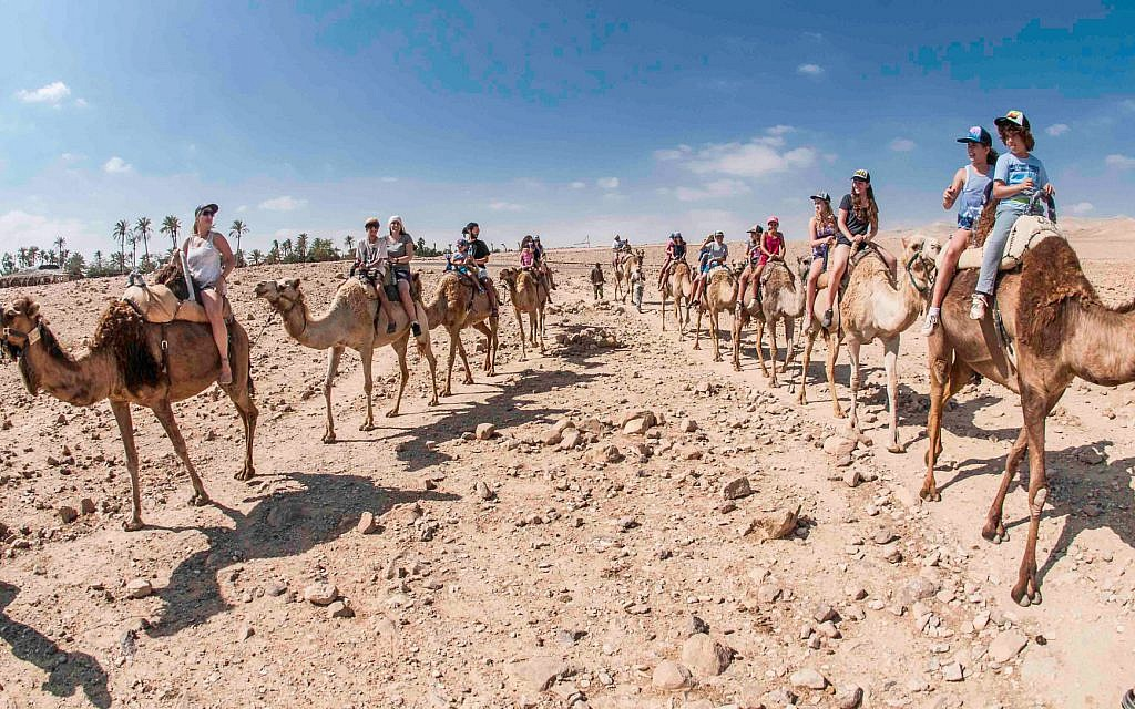 Une promenade à dos de chameau à Kfra Hanokdim (Autorisation : Kfra Hanokdim)