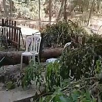 Capture d'écran d'une vidéo des lieux où une branche a chuté, tuant un petit garçon de 10 ans dans un parc de loisirs, après de Laschisch, le 17 juillet 2019 (Capture d'écran : Twitter)