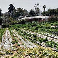 Une partie de la ferme biologique dans le village pour les jeunes Hadassah Meir-Shfeyah. (Times of Israel)