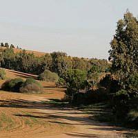 Des arbres dans le nord du Negev, le 12 décembre 2008 (Crédit : Anna Kaplan/ Flash90)