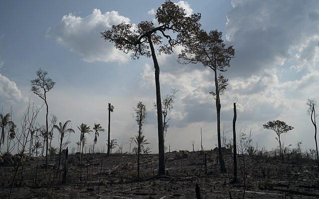Des arbres détruits par le feu en Amazonie, dans la région de Novo Progresso, au Brésil, le 25 août 2019. (Crédit : AFP /Leo Correa)