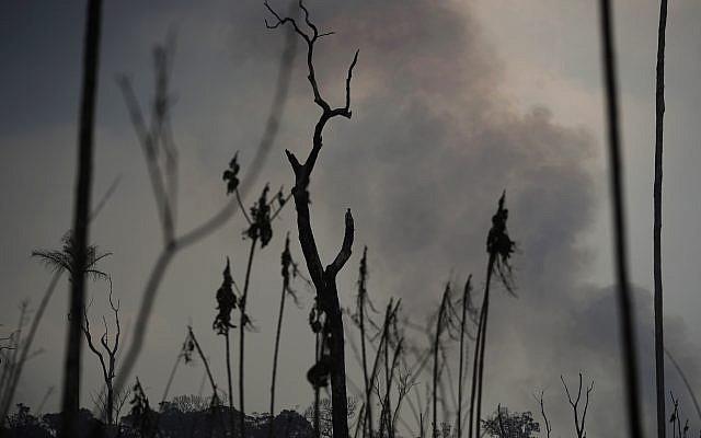 Des arbres détruits par le feu en Amazonie, dans la ville de Port Velho, au Brésil, le 26 août 2019. (Crédit : /Eraldo Peres)