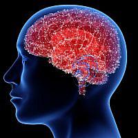 Image d'illustration d'un cerveau (Crédit : iStock)