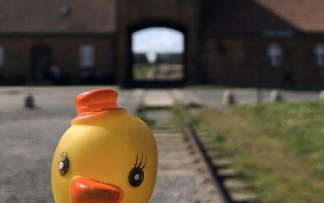 La photo d'un canard en plastique aux abords du camp de la mort d'Auschwitz, postée par un blogueur, le 6 novembre 2019 (Crédit : Mémorial d'Auschwitz via Twitter via JTA)