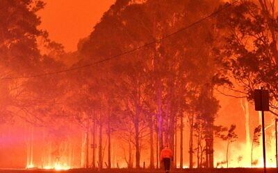 Un pompier passe devant des arbres en feu pendant une bataille contre des feux de brousse autour de la ville de Nowra dans l'État australien de Nouvelle-Galles du Sud le 31 décembre 2019. (Crédit : SAEED KHAN / AFP)