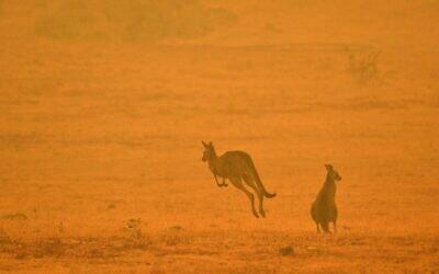 Un kangourou saute dans un champ au milieu de la fumée d'un feu de brousse dans la Snowy Valley, à la périphérie de Cooma, le 4 janvier 2020. (Crédit : SAEED KHAN / AFP)