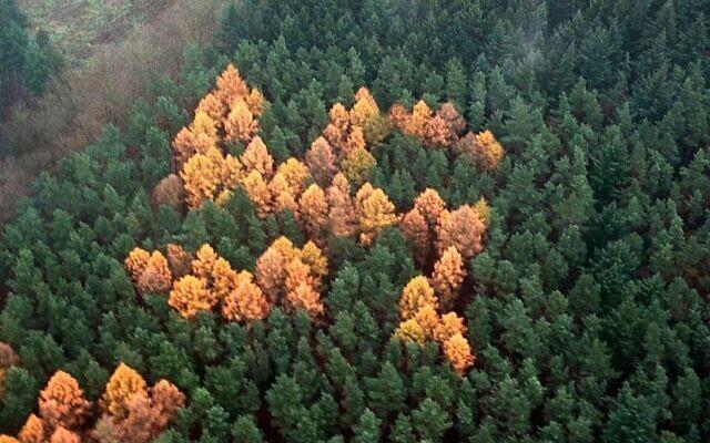 Des arbres plantés de sorte à former le symbole d'une croix gammée, en Allemagne. (Crédit : Bouteflikov / Twitter)