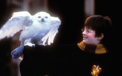 """Daniel Radcliffe dans l'adaptation cinématographique """"Harry Potter à l'école des sorciers (Peter Mountain/WireImage via JTA)"""