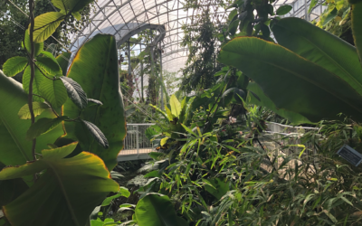 La serre hébergeant la forêt tropicale dans le conservatoire rénové du jardin botanique de Jérusalem (Crédit : Jessica Steinberg/Times of Israel)