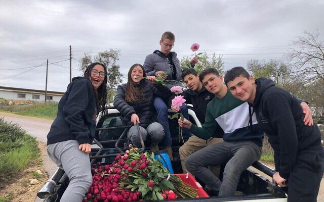 Les membres du kibboutz Kfar Etzion aident à ramasser des pivoines prêtes à être vendues en Israël cette année, avant que les règles de distanciation sociales ne soient mises en place (Autorisation : Kibbutz Kfar Etzion)