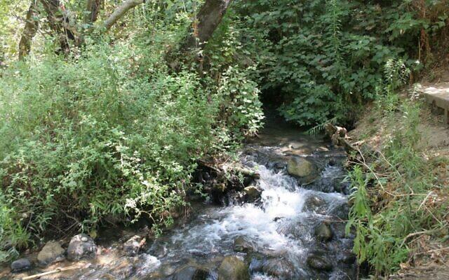 La rivière Snir (Crédit : Shmuel Bar-Am)