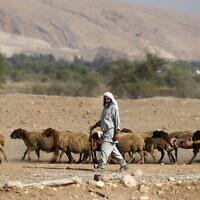 Un berger bédouin avec son troupeau de moutons dans la vallée du Jourdain, en Cisjordanie, le 11 septembre 2019 (Crédit : AHMAD GHARABLI / AFP)