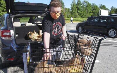 Steve Picazio place des produits d'épicerie dans sa voiture après ses courses au magasin Shaw, à Berlin, dans le Vermont, aux Etats-Unis, le 18 juin 2020 (Crédit : AP Photo/Lisa Rathke)