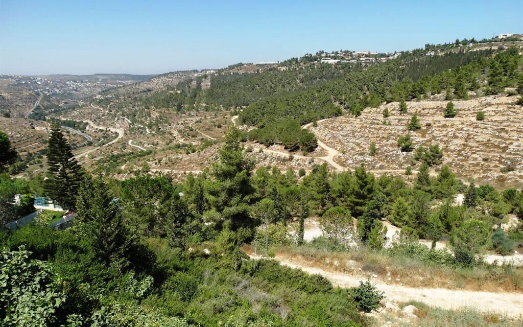 Reches Lavan, ou Crête blanche, à l'ouest de Jérusalem (Crédit : Dov Greenblat, Society for the Protection of Nature in Israel)