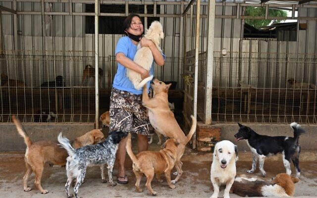La médecin indonésienne Susana Somali entourée de chiens dans son refuge à Jakarta, le 30 juin 2020. (ADEK BERRY / AFP)