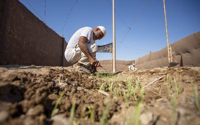 Un agriculteur irakien vérifie ses récoltes dans la ville portuaire d'Al-Faw, dans le sud de l'Irak, à 90 kilomètres au sud de Bassorah, près de Chatt al-Arab et du Golfe, le 17 août 2020. (Hussein FALEH / AFP)