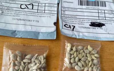 De mystérieuses graines chinoises livrées par la poste aux Etats-Unis. (Crédit : Washington State Department of Agriculture)