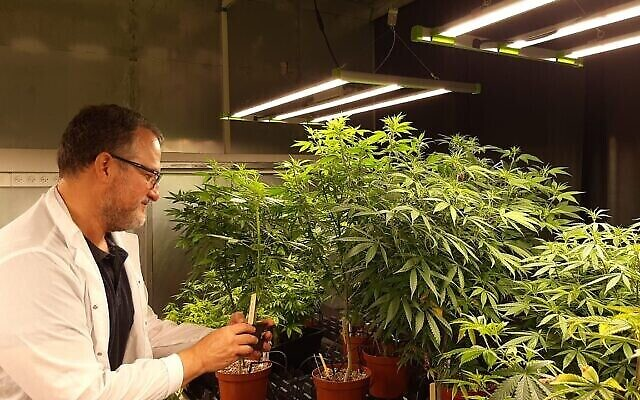 Le PDG et co-fondateur de CanBreed Ido Margalit sur le site de R&D de la start-up consacrée au cannabis, à Givat Chen. (Autorisation)