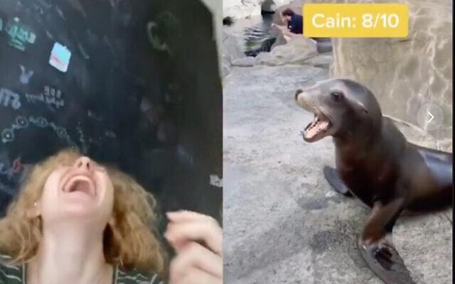 L'usagère de TikTok Mallory Palmer a créé un montage à partir d'un lion de mer et d'appels au shofar qui est devenu viral (Capture d'écran)