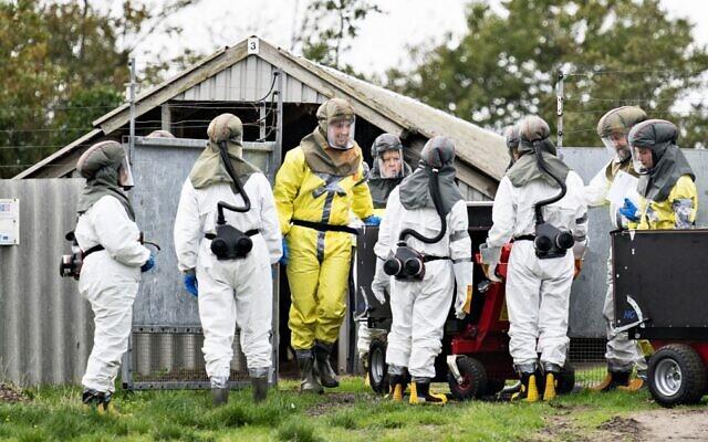 Des employés de l'Administration vétérinaire et alimentaire danoise et de l'Agence danoise de gestion des urgences portent des équipements de protection pendant l'abattage de visons à Gjol, au Danemark, le 8 octobre 2020, en raison de la contamination par le coronavirus Covid-19. (Crédit : Henning Bagger / Ritzau Scanpix / AFP)