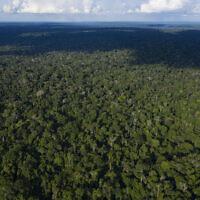 Une photo aérienne prise le 22 novembre 2019 montre des arbres dans la réserve de Renascer, dans la forêt amazonienne de Prainha, dans l'État de Para, au Brésil. (AP Photo/Leo Correa)