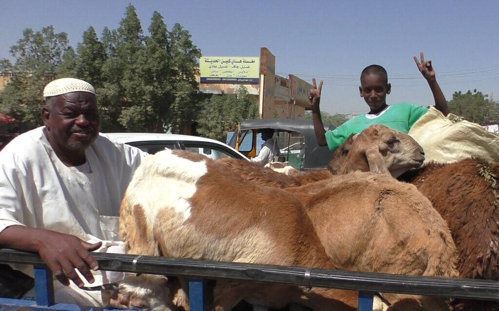 Un enfant sur une bétaillère au Soudan, au mois de novembre 2020.  (Crédit : Ziv Genesove)