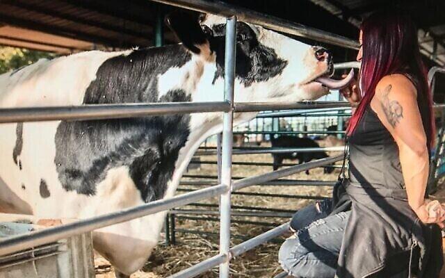 """Sharon Cohen avec un ami bovin au refuge pour animaux """"Starting Over"""" au Moshav Herut, dans le centre d'Israël. (Revital Topiol)"""