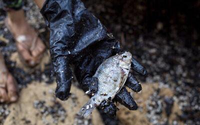 Une femme tient un poisson mort après l'avoir nettoyé du goudron qui s'était déposé sur ses écailles dans la réserve naturelle de Gador, près de Hadera, le 20 février 2021. (Crédit : AP Photo/Ariel Schalit)