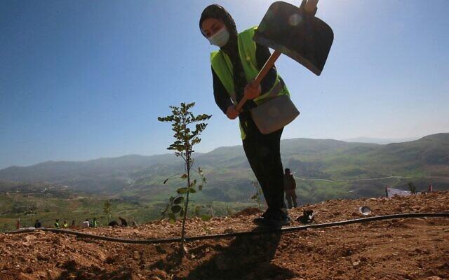 Des Jordaniens participent à la plantation d'arbres d'eucalyptus et de caroube près de la forêt de Kufranjah au nord d'Amman, le 11 février 2021. (Crédit : Khalil MAZRAAWI / AFP)