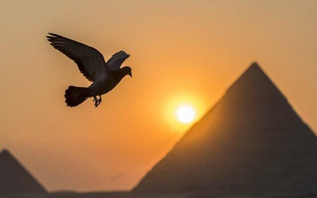 Un pigeon dans la ville de Gizeh, jumelle à la capitale égyptienne, le 21 février 2021, avec les pyramides de Khafre (Chephren) et Menkaure (Menkheres) en arrière-plan. (Crédit : Khaled DESOUKI / AFP)