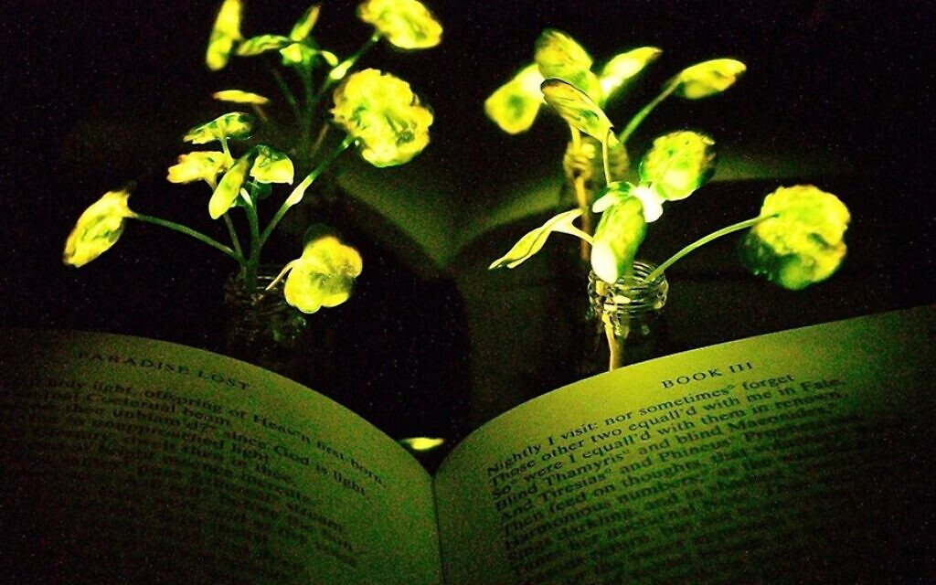 Du cresson fluorescent. (Crédit : Seon-Yeong Kwak/MIT)