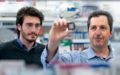 """Le professeur Yaakov Nahmias (à droite) et le chercheur Aaron Cohen, tenant la puce du """"simulateur humain"""". (Autorisation Université hébraïque)"""