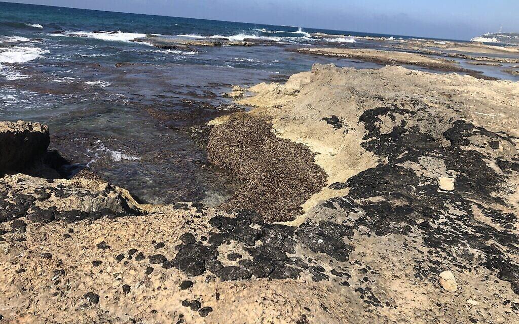 Du goudron sur les rochers sur la plage d'Achziv, le 25 février 2021. (Crédit : Sue Surkes/Times of Israel)