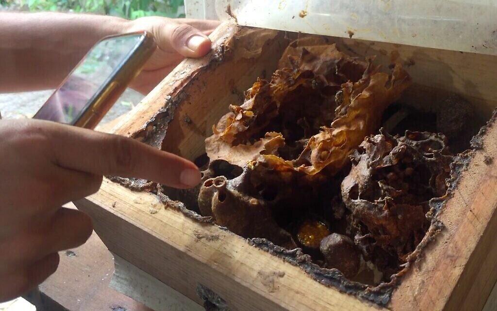 Nataniel Sagi montre l'intérieur d'une ruche dans son sanctuaire sur l'île de Cozumel au Mexique, mars 2021. (Julie Masis)