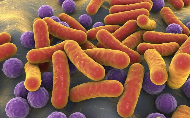 Image d'illustration en 3D de bactéries et de cocci en forme de bâtonnet dans le microbiome humain. (Crédit : Dr_Microbe ; iStock by Getty Images)