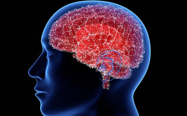 Image illustrative d'un cerveau. (iStock)