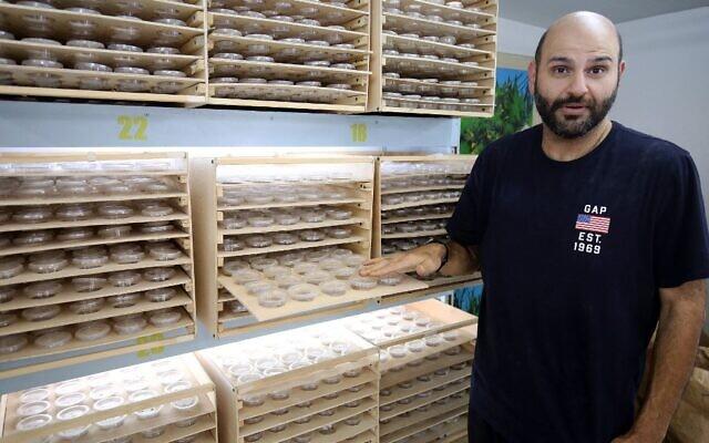 L'homme d'affaires koweïtien Jassem Buabbas montre des super vers dans sa ferme de Kabad, à 50 km au nord-ouest de Koweït City, le 20 mai 2021. (Crédit : YASSER AL-ZAYYAT / AFP)