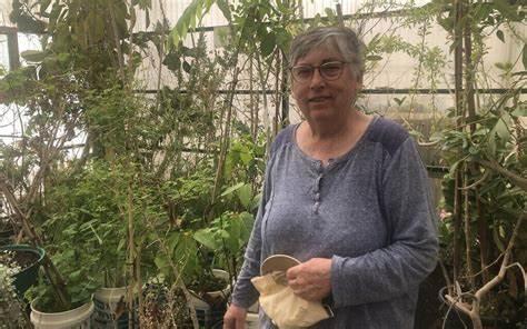 Elaine Solowey dans sa serre du Kibbutz Ketura, dans le sud d'Israël, le 21 mars 2021. (Crédit : Sue Surkes/Times of Israel)